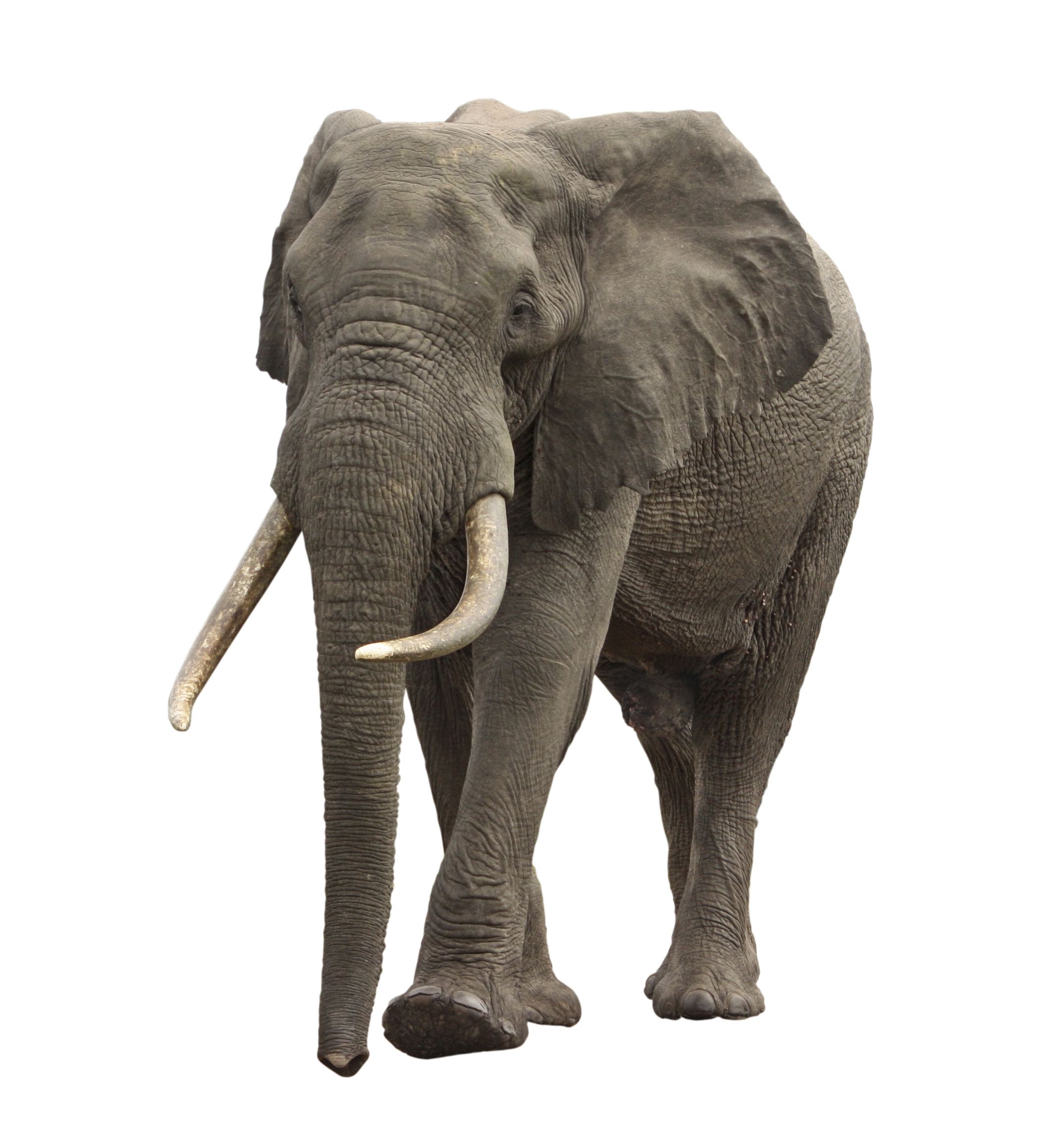 there�s an elephant in the big data room and it ain�t